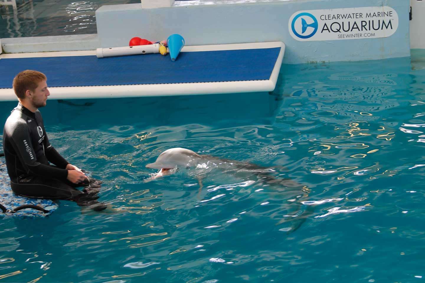 Why You Should Visit The Clearwater Marine Aquarium