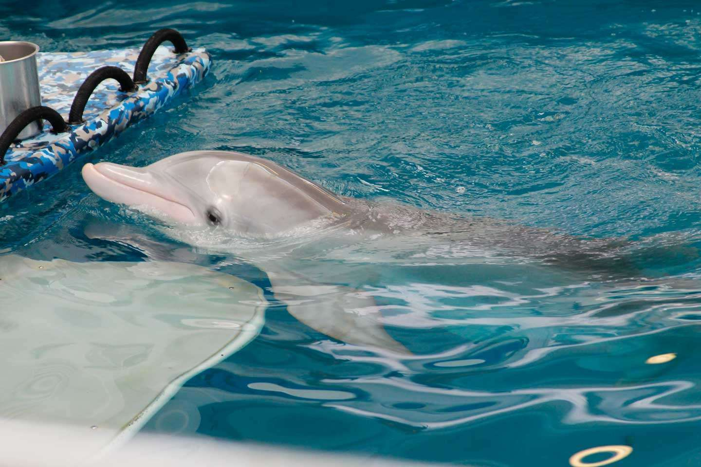 Why You Should Visit the Clearwater Marine Aquarium ...