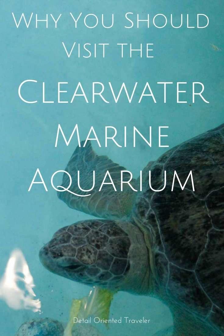 pin for Clearwater Marine Aquarium