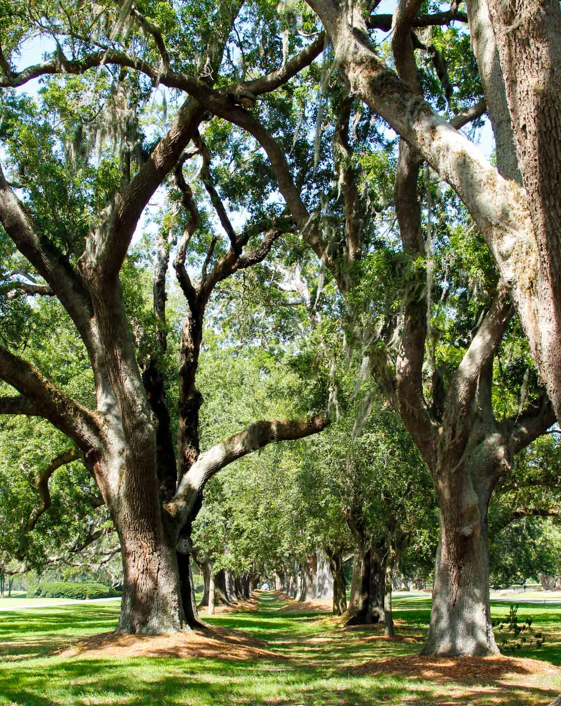What to do on the beautiful and natural st simons island