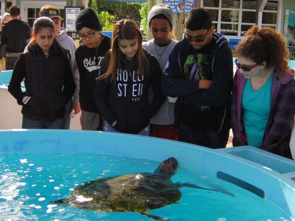 Loggerhead Marinelife in Palm Beach