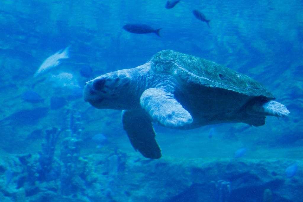 SeaWorld Park to Planet