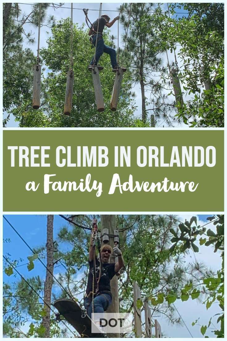 tree climb in orlando pin