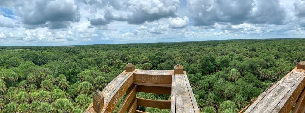 things to do with teens in sarasota include doing the canopy walk at Myakka River State Park