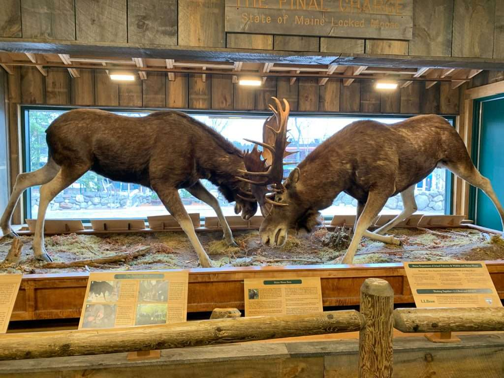 locked moose displayed in L.L. Bean flagship store a great way to spend 24 hours in Freeport Maine