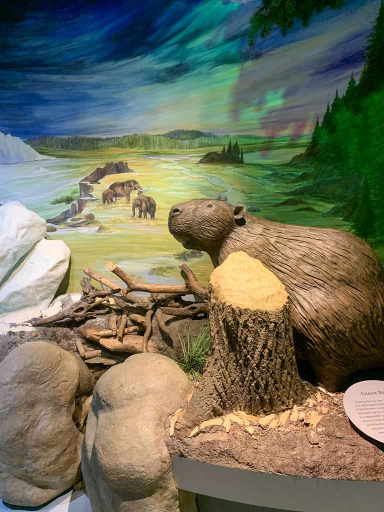 giant beaver at the Lakeshore Muskegon Museums