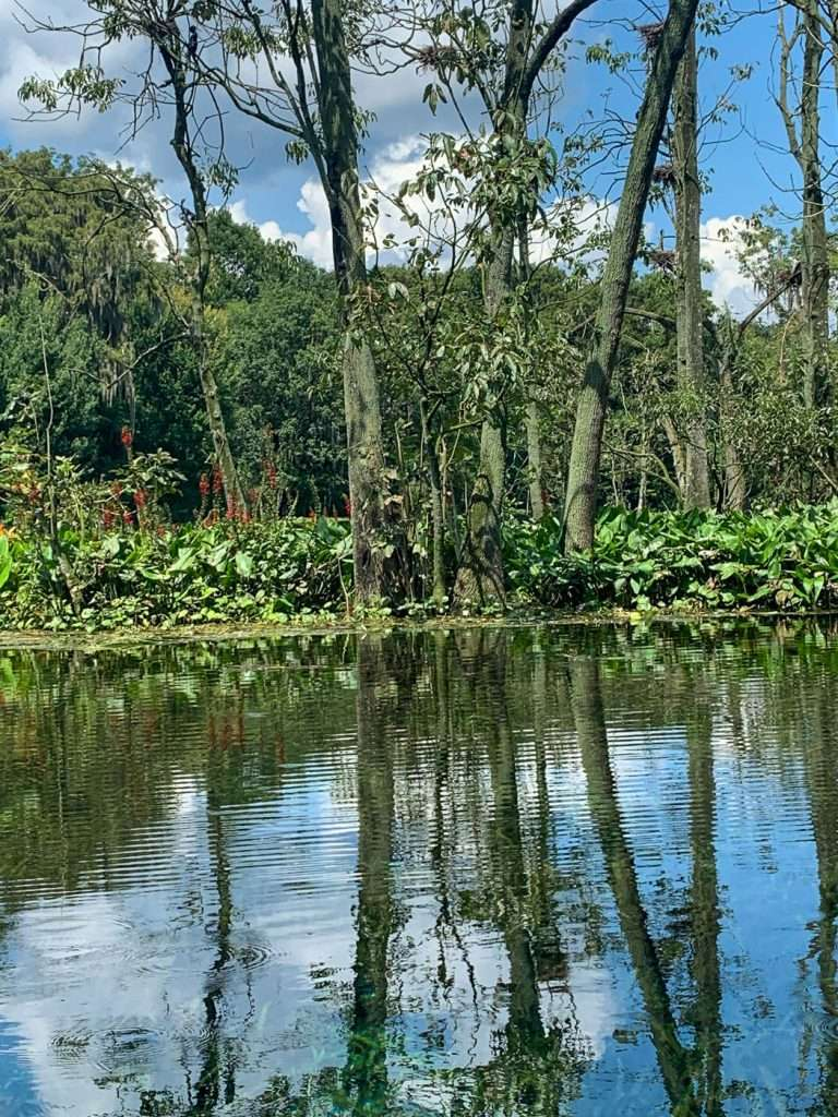 one of the top things to do in Ocala is take a ride along the Silver River and Silver Springs.