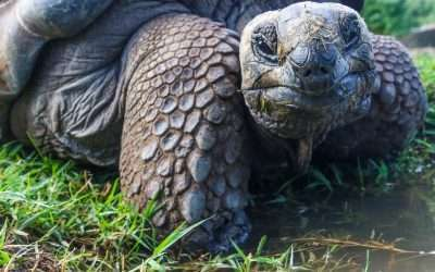 The Galapagos Islands are Made for Bucket Lists- Here's Why