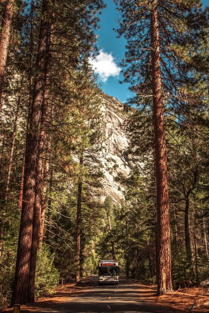 tall trees in yosemite national park