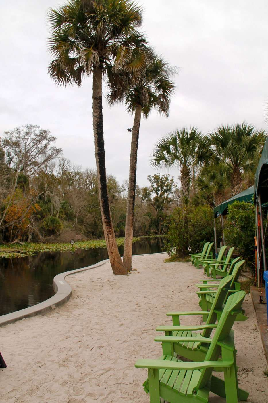 palm trees along Wekiva River