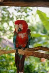 Macaw at the Central Florida Zoo