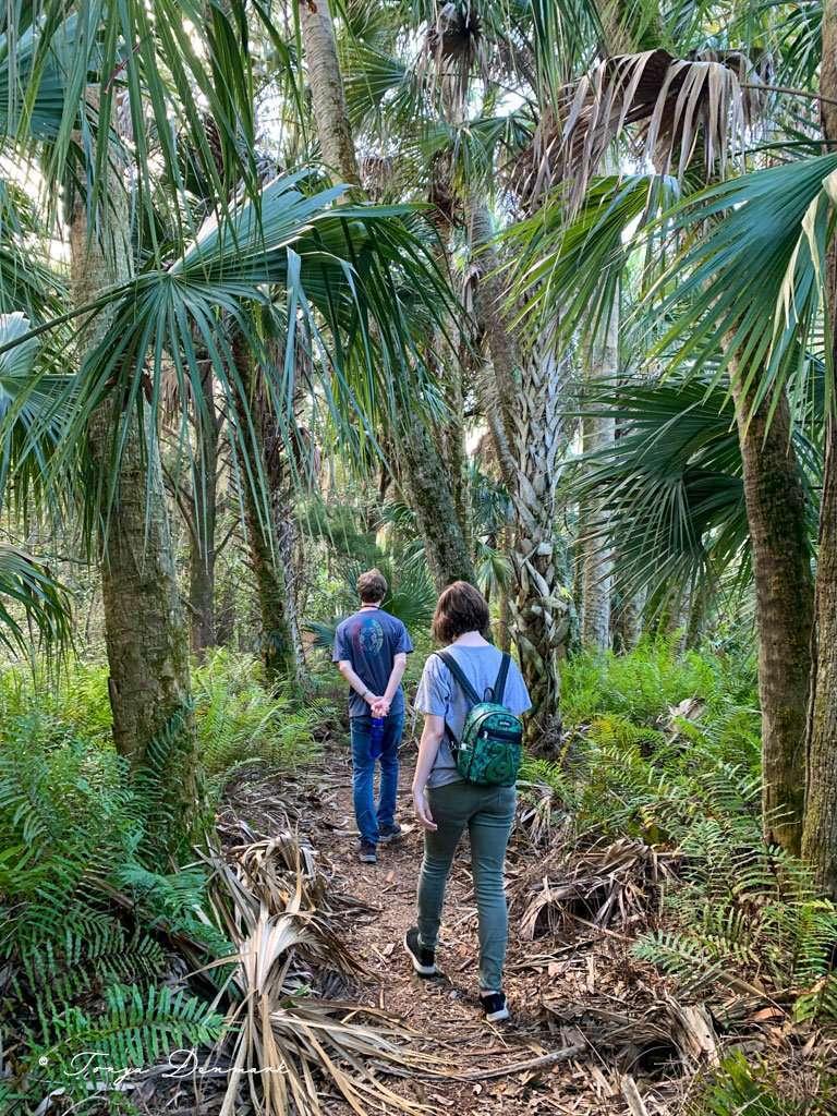 Hiking through palm trees in Titusville, Florida