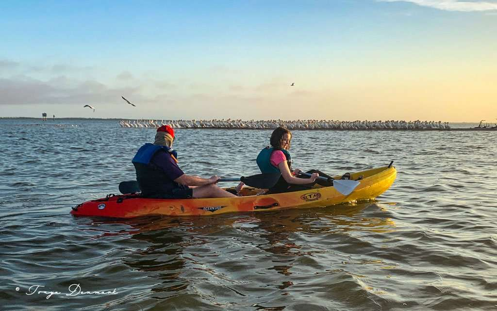 kayaking in Titusville with two people in a double kayak and hundreds of white pelicans